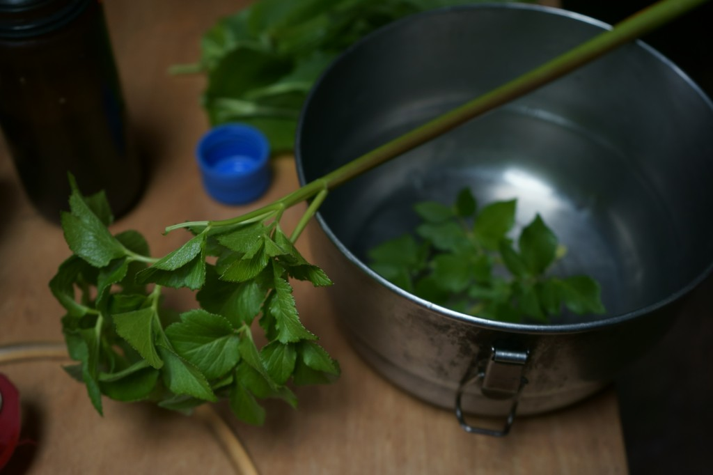 Beach lovage, a relative of parsley.