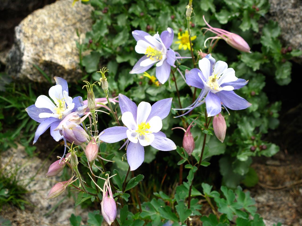 Flowers + StillLife