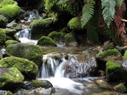 "The Kepler Track: One of New Zealand's legendary ""Great Walks."""