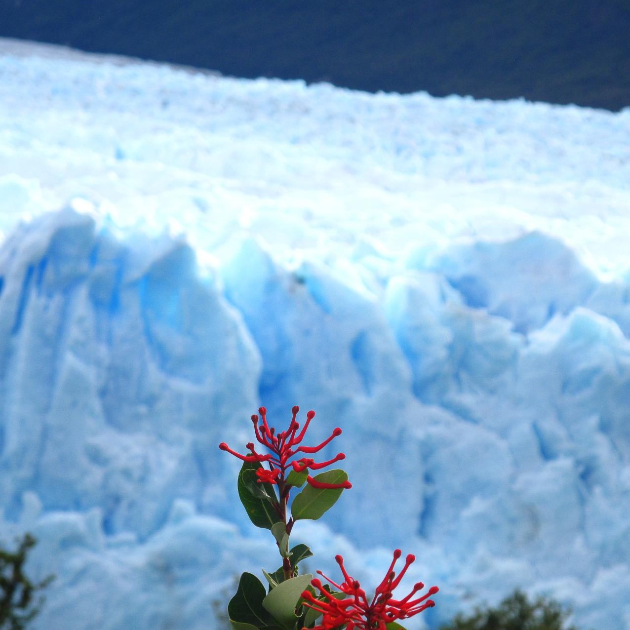 Perito Moreno Glaier, Argentine Patagonia.